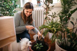cómo cuidar las plantas en otoño